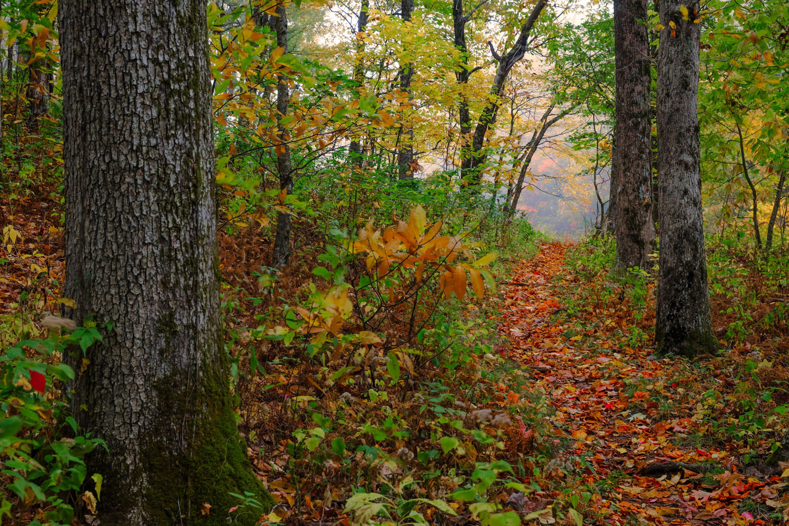 A Limited Edition, Fine Art photograph from the Appalachian trail where it is about to emerge from the forest in the fall in...