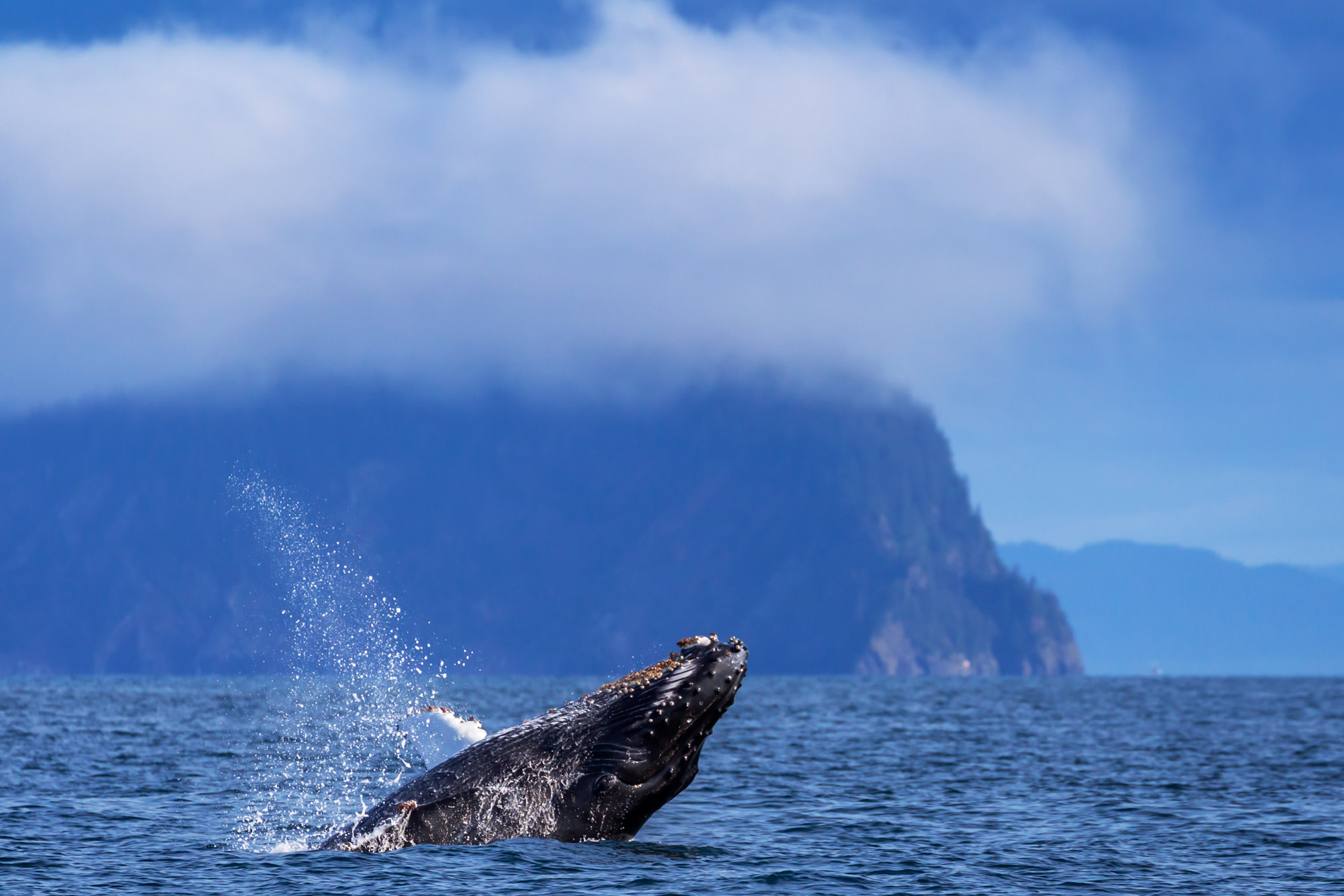 Whale, Humpback Whale, Alaska, Resurrection Bay, limited edition, photograph, fine art, wildlife, photo