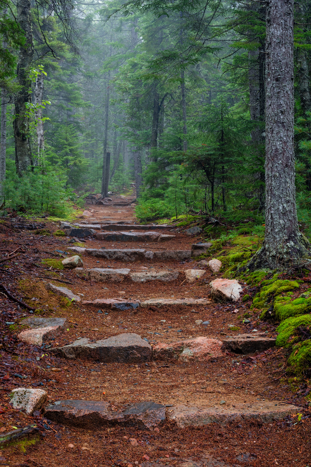 maine, acadia, trail, trees, steps, fog