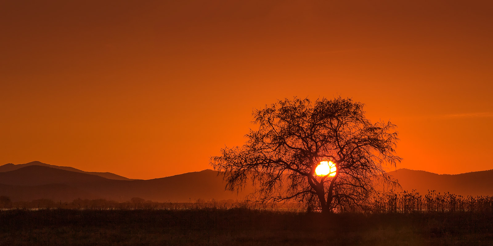 A Limited Edition, Fine Art photograph of a firey sunset with the sun ball behind a barren tree in the Mission Mountain Range...