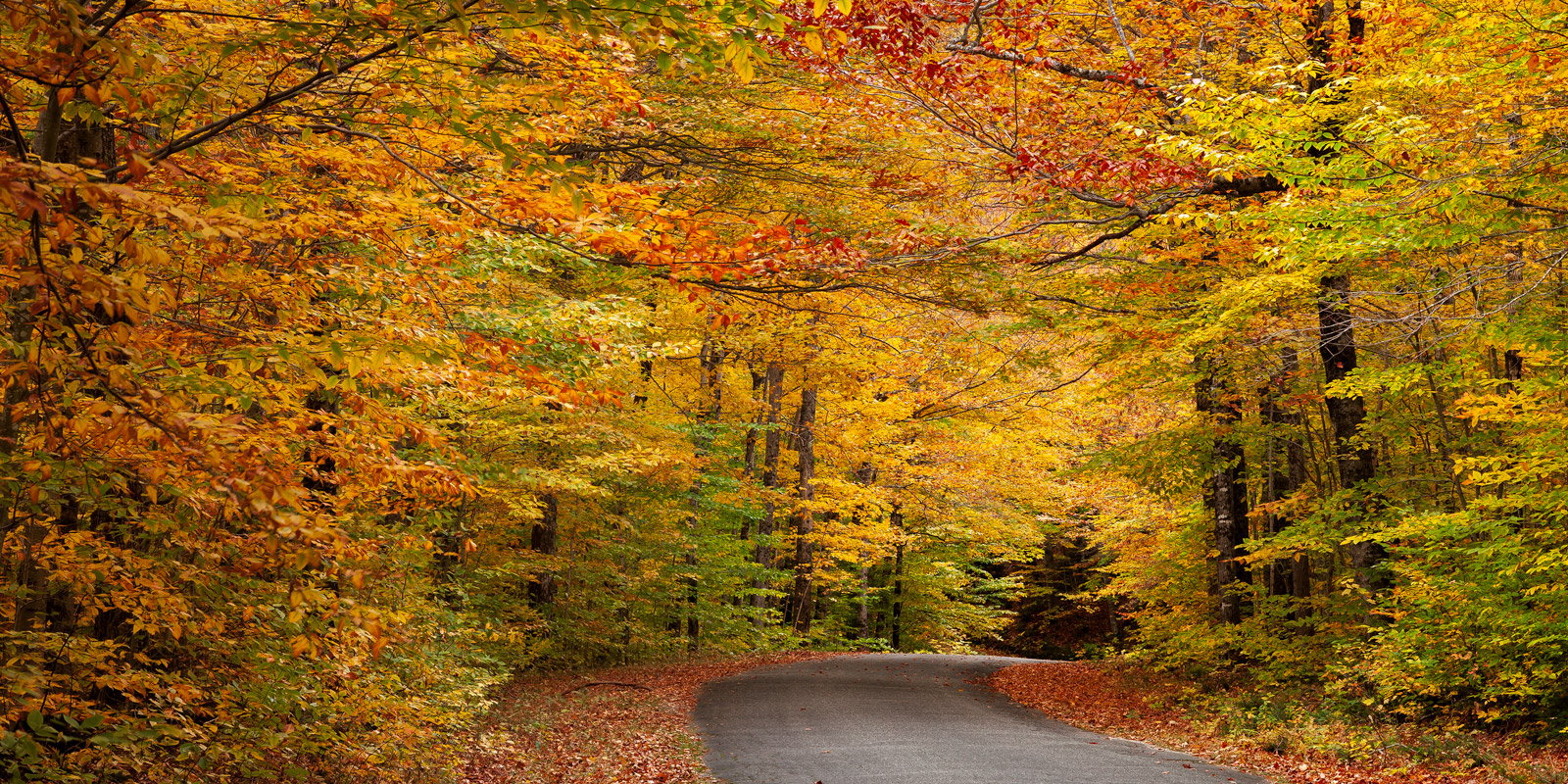 New Hampshire, White Mountains, Fall, Color, Road, fall color, photo