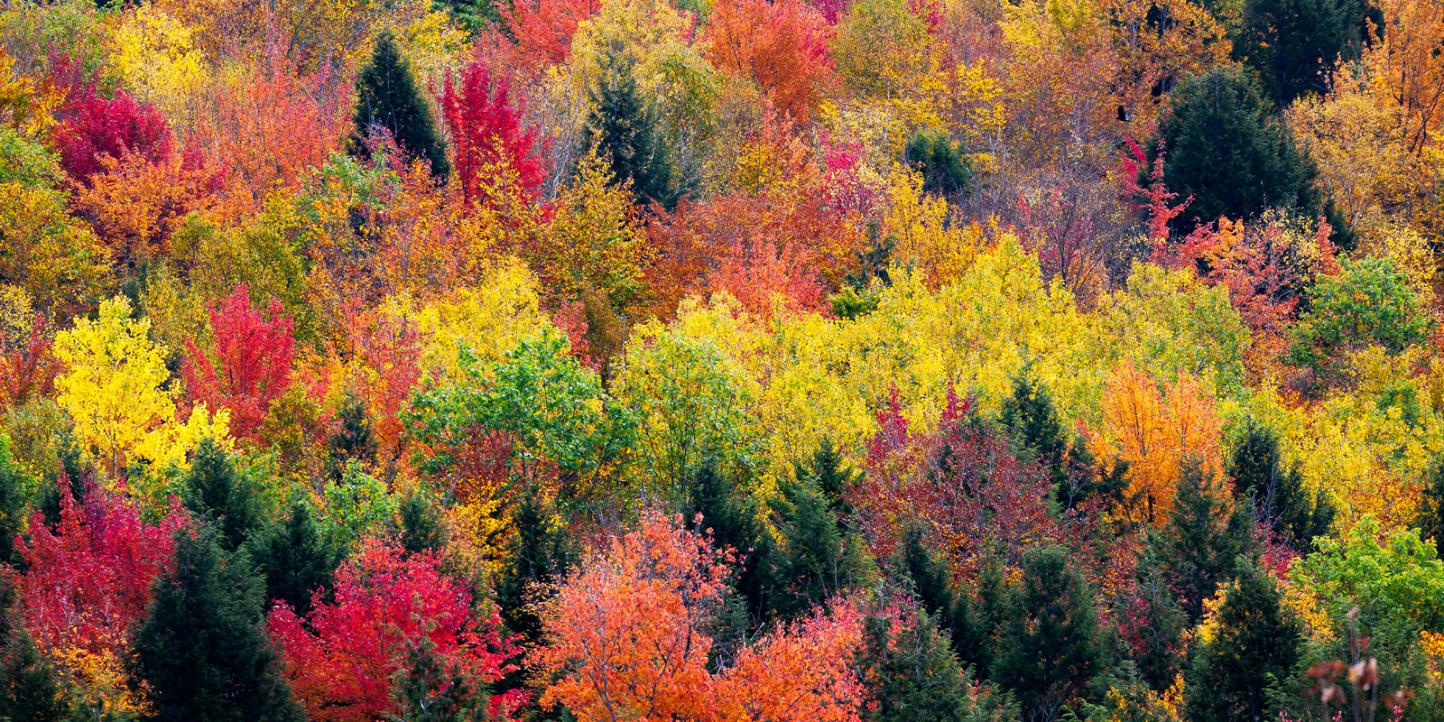 New Hampshire, White Mountains, Fall, Color, Trees, fall color, photo