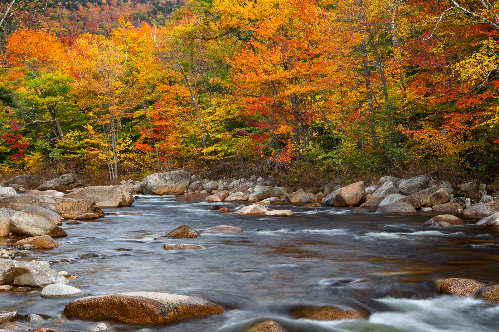 Swift Colors White Mountains National Forest New