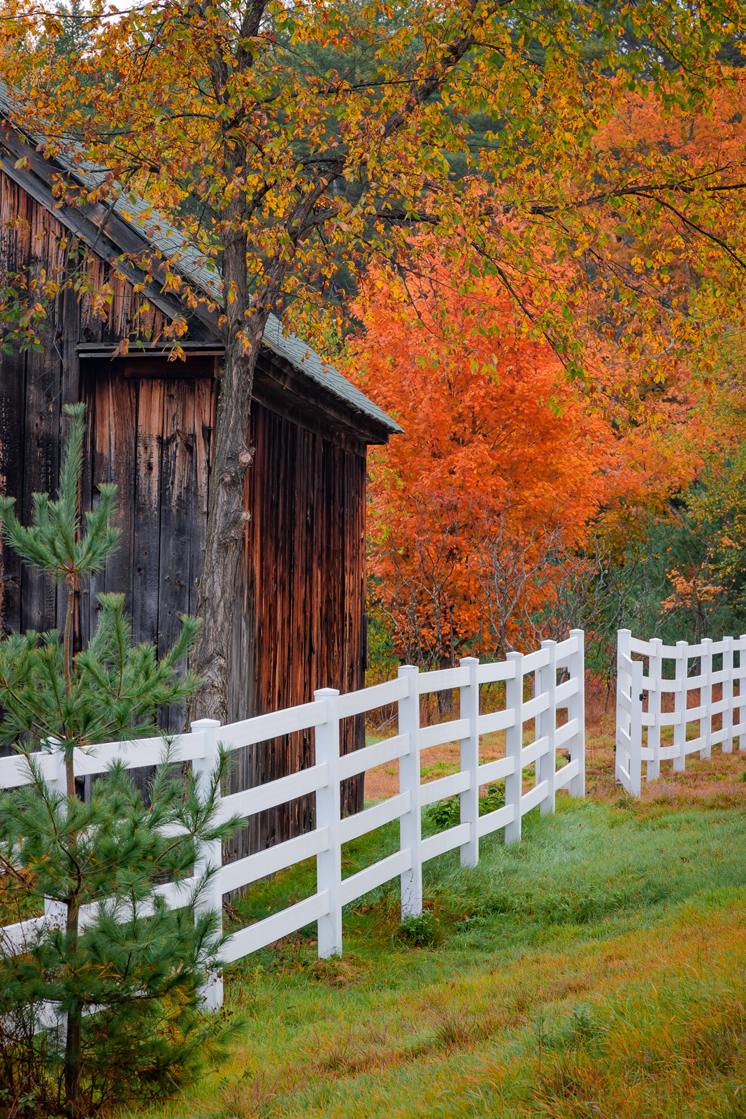 New Hampshire, White Mountains, Fall, Color, Barn, limited edition, photograph, fine art, landscape, fall color, new england, photo