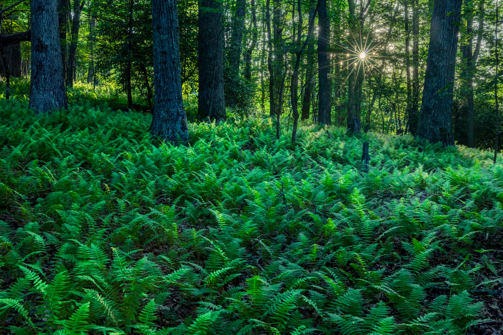 ferns in the forest with sunlight breaking through