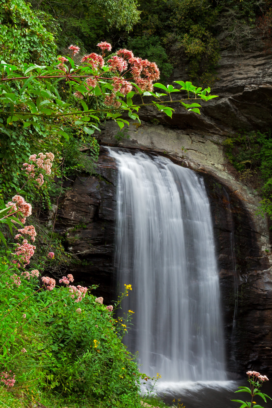 North Carolina, Looking Glass, Falls, Waterfall. Spring, Flowers, limited edition, photograph, fine art, landscape, photo