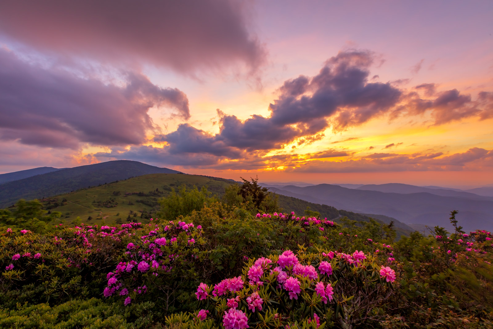 A Limited Edition, Fine Art photograph of Roan Mountain, Tennessee with an incredible sunset sky over the rhododendrons blooming...