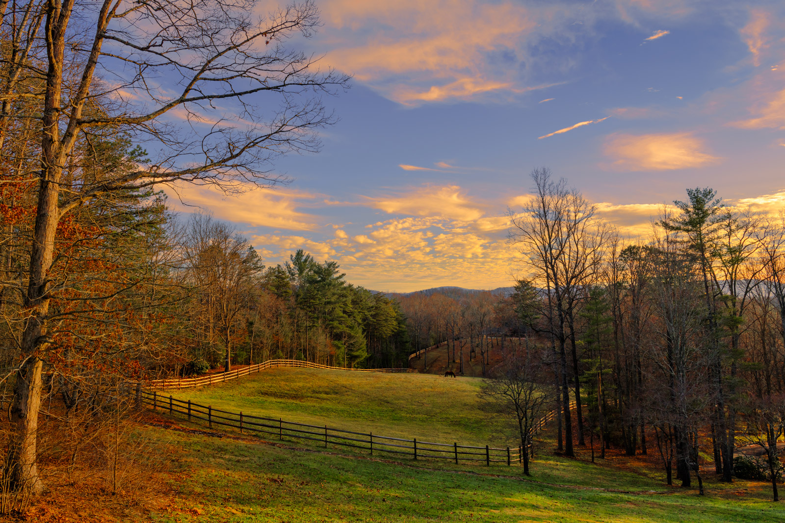 North Carolina, Asheville, Sunset, Pasture, Horse, photo