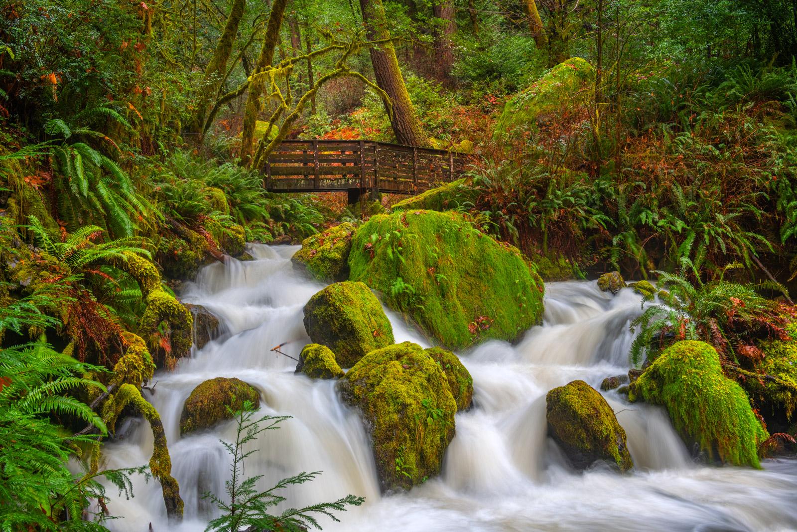 Oregon, Stream, Footbridge