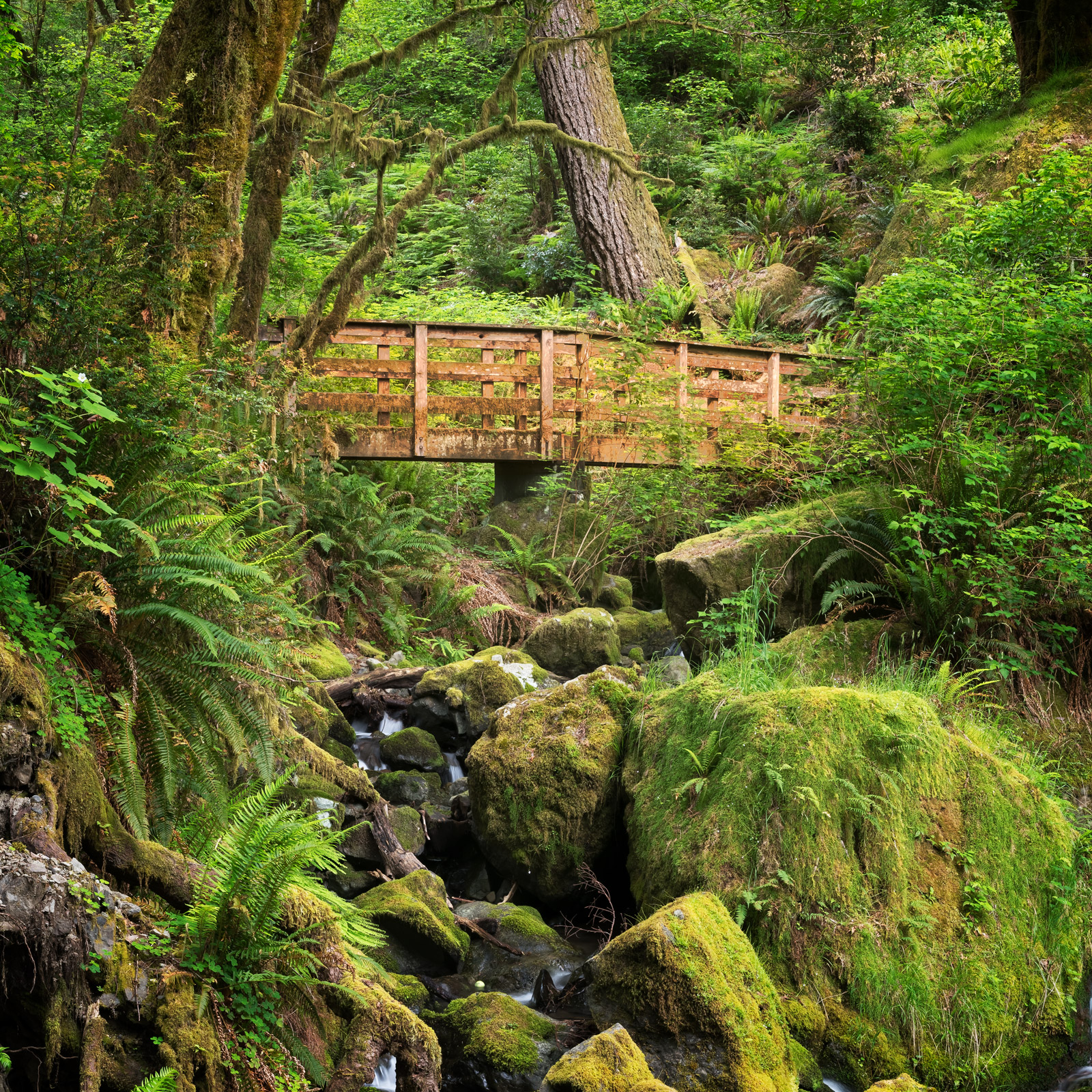 Oregon, forest, trail, footbridge, Brookoings, photo