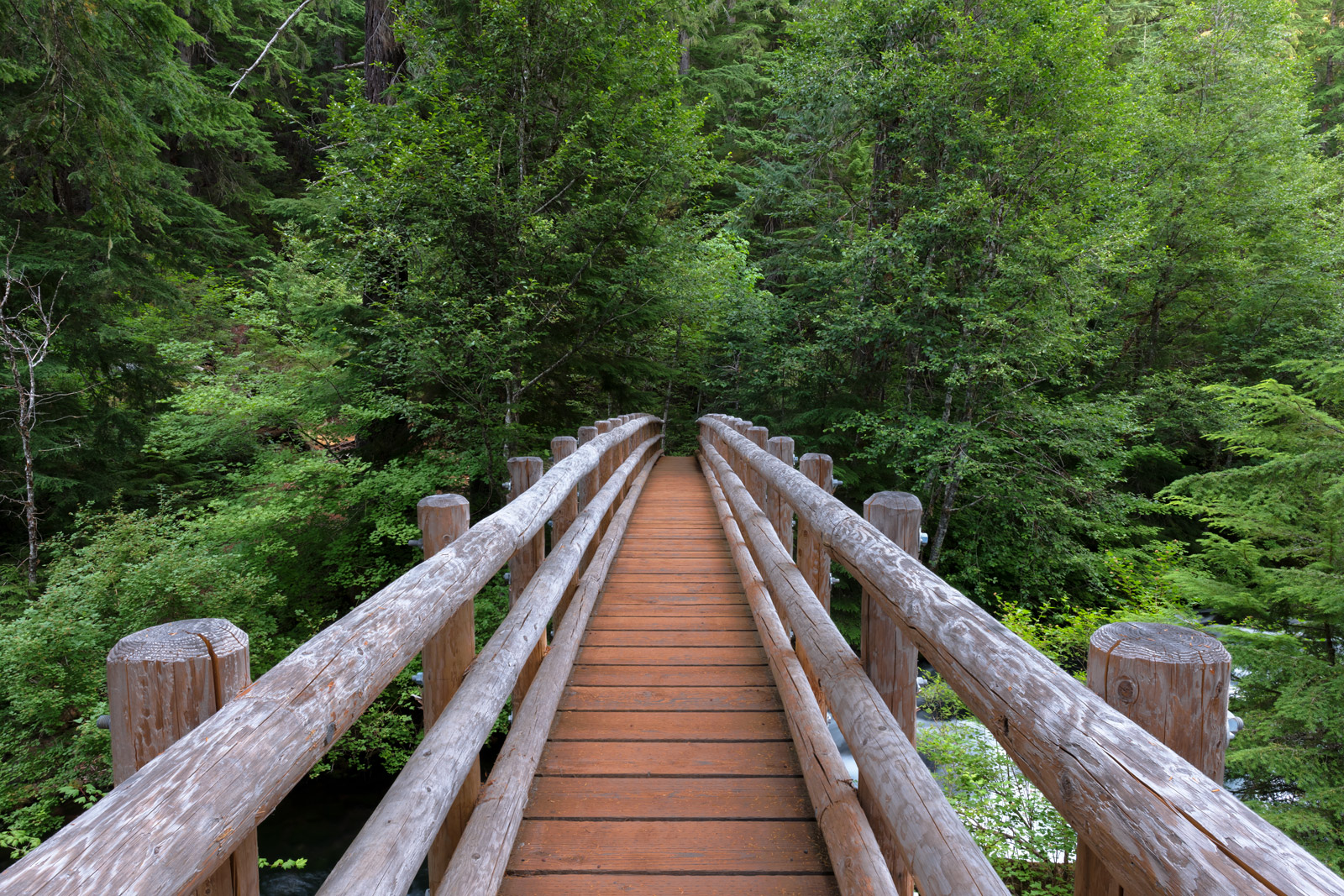 Oregon, McKenzie, River, bridge, wood, forest, tree, Footbridge, photo