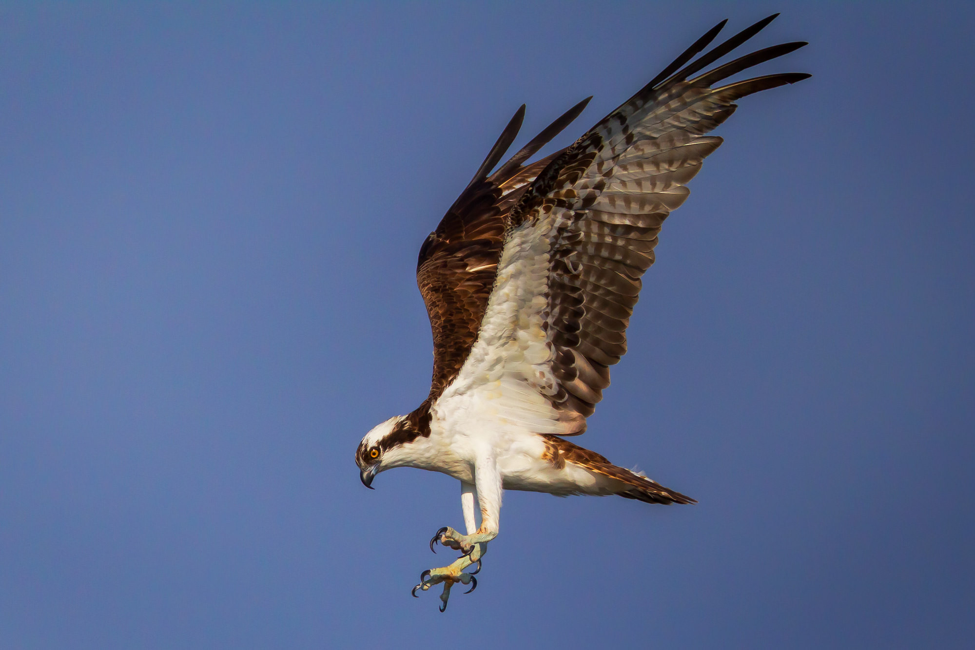 Osprey, Florida, photo