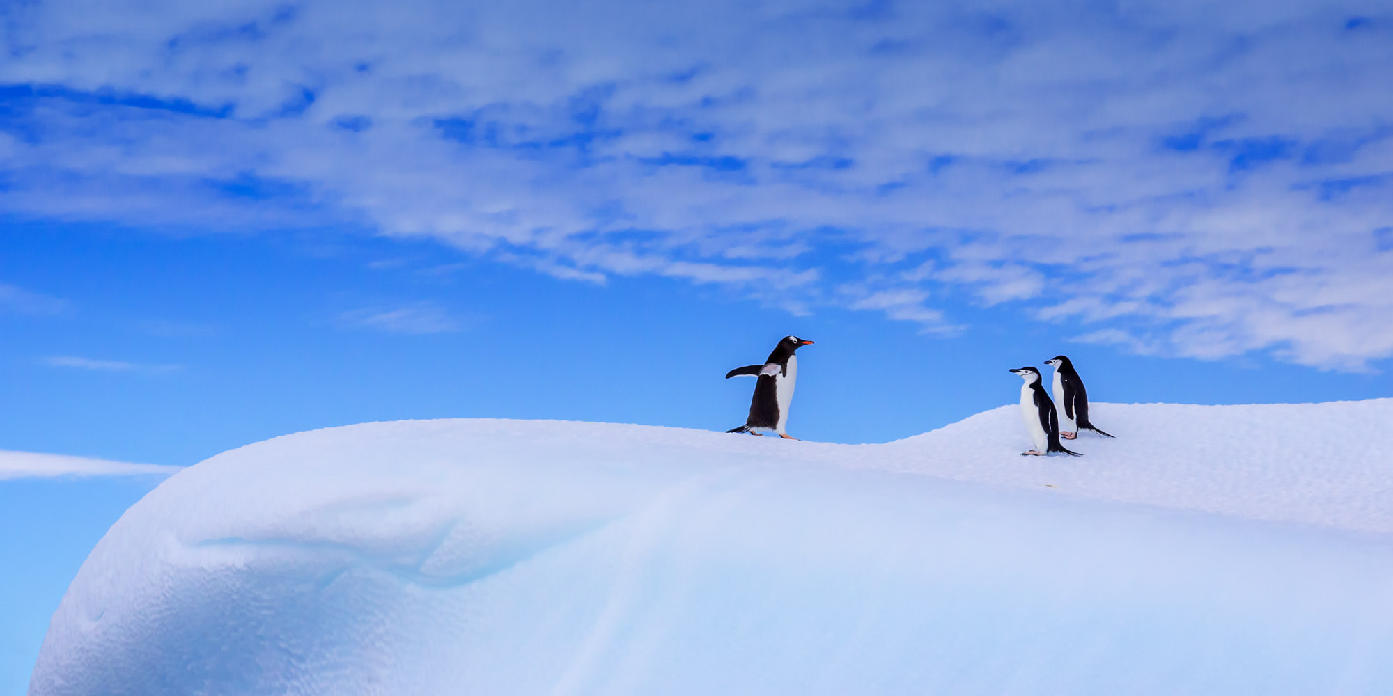 Penguin, Antarctica, photo