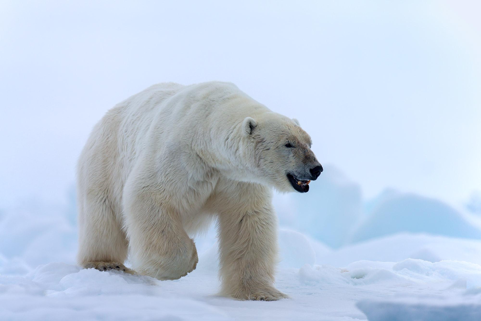 Big, Bad Leroy Bear
