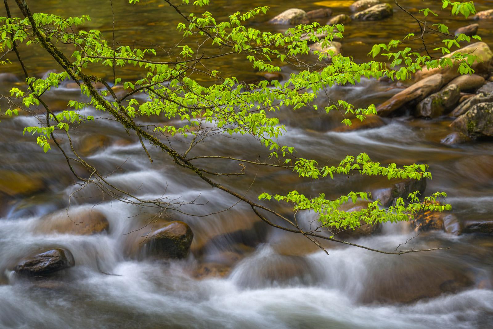 Smoky Mountains, Litte River, Spring