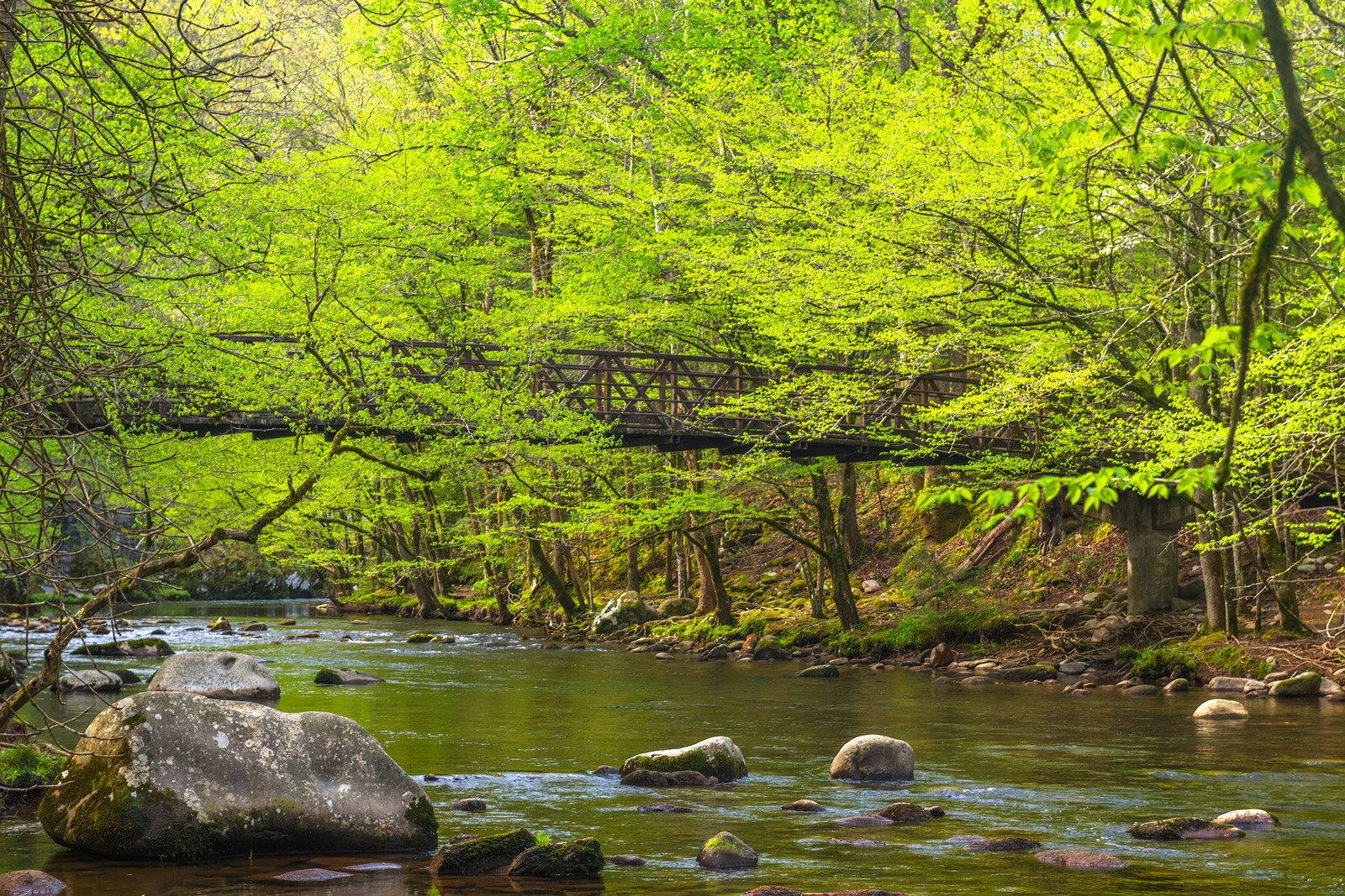 Tennessee, Smoky Mountains, Footbridge, River