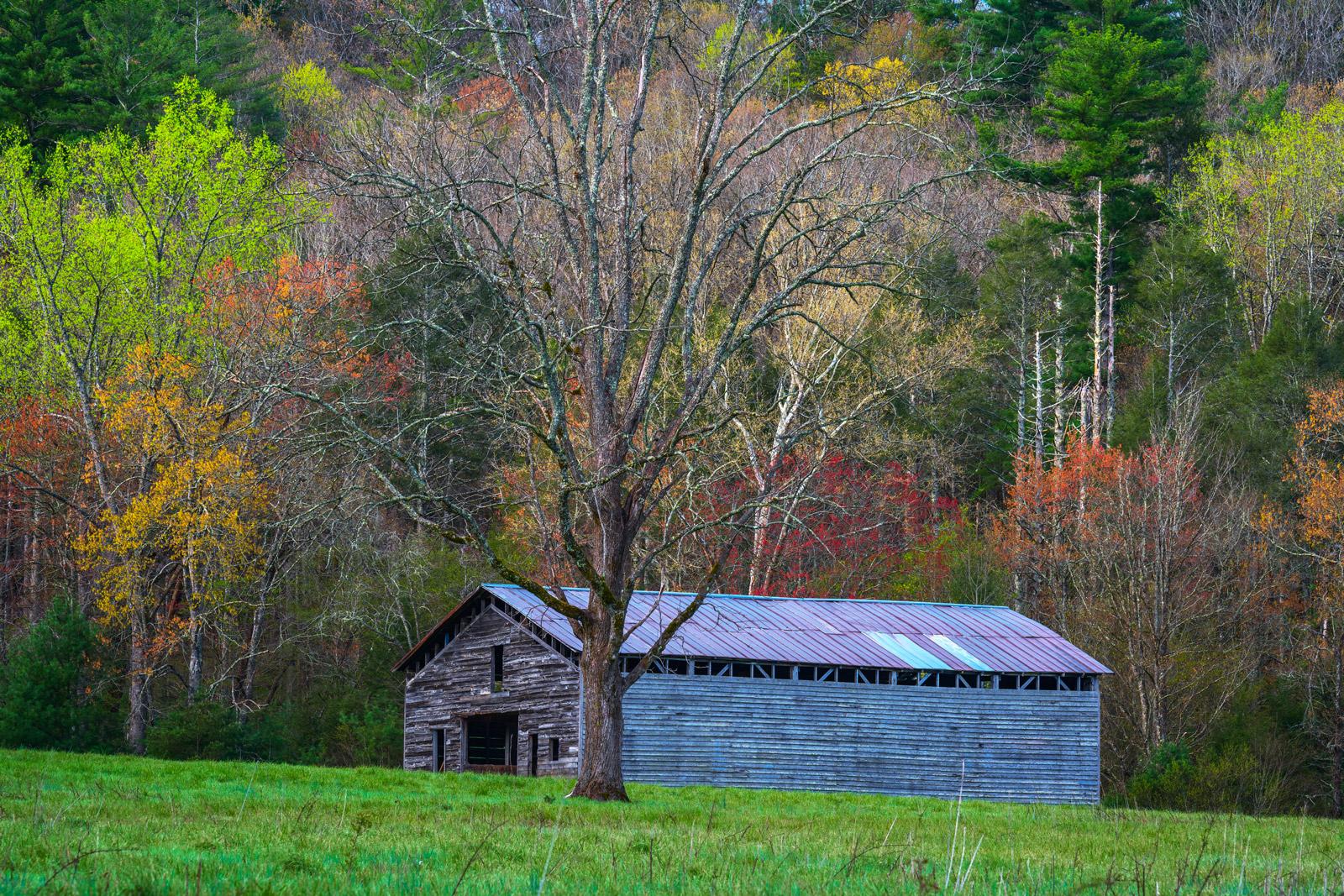 Smoky Mountains, Cades Cove, Barn, Spring