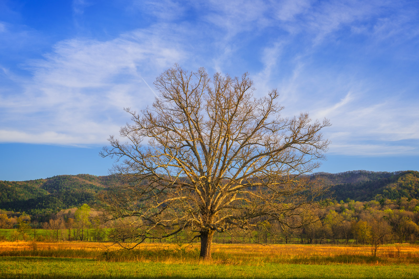 Tennessee, Smoky Mountains, Tree, Cades Cove