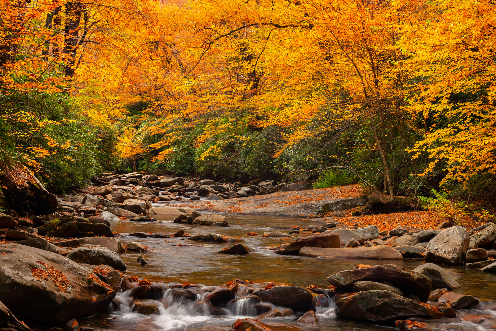 A Limited Edition, Fine Art photograph of Smoky Mountains Fall Color with beautiful fall gold colored trees overhanging a river...