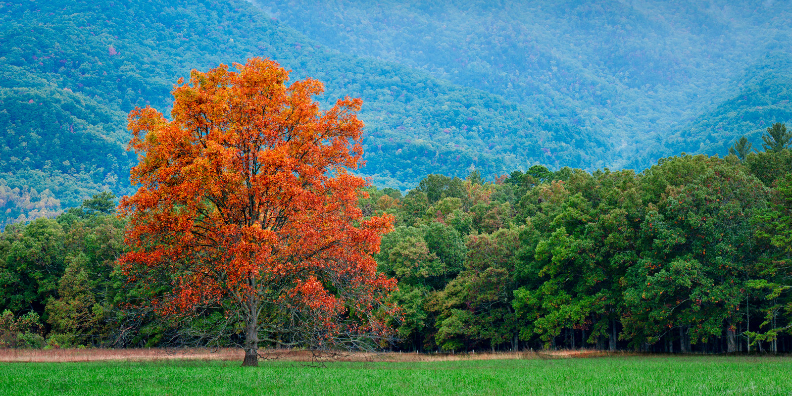 Tennessee, Smoky Mountains, Cades Cove, Fall, Color, limited edition, photograph, fine art, landscape, fall color, photo