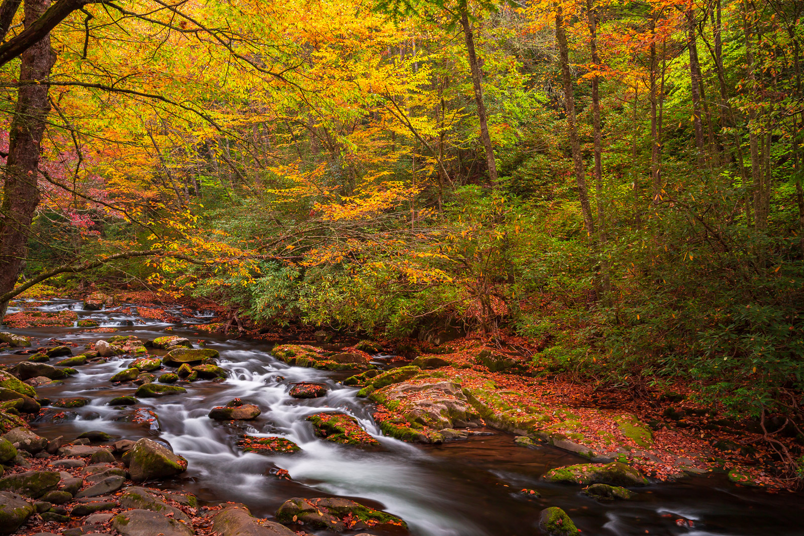 Tennessee, Smoky Mountains, Stream, Fall Color, photo