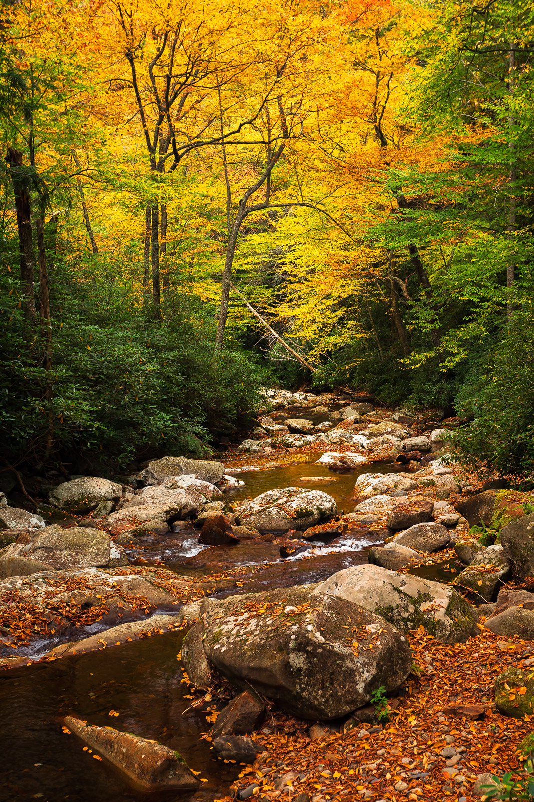 Tennessee, Smoky Mountains, Fall, Color, River, fall color, photo