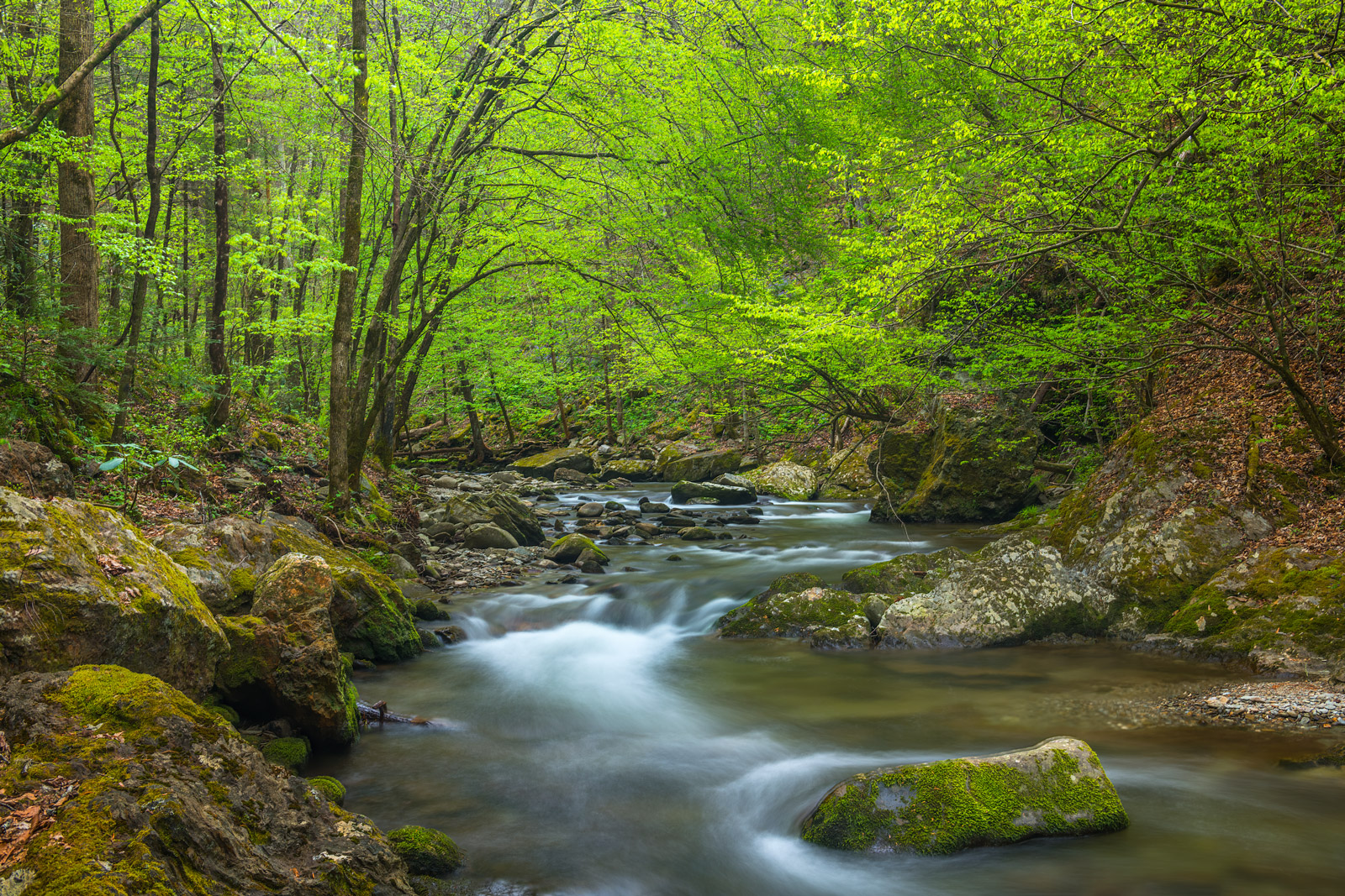 Smoky Mountains, Spring, River, Trees