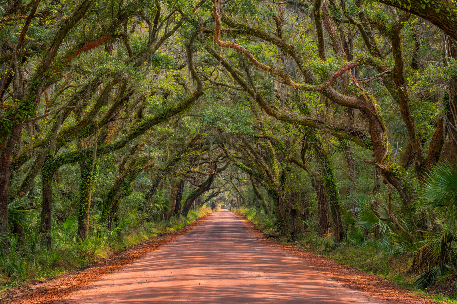 A Limited Edition, Fine Art photograph of an oak tree tunnel on Botany Bay Road in South Carolina. Available as a Fine Art Print...