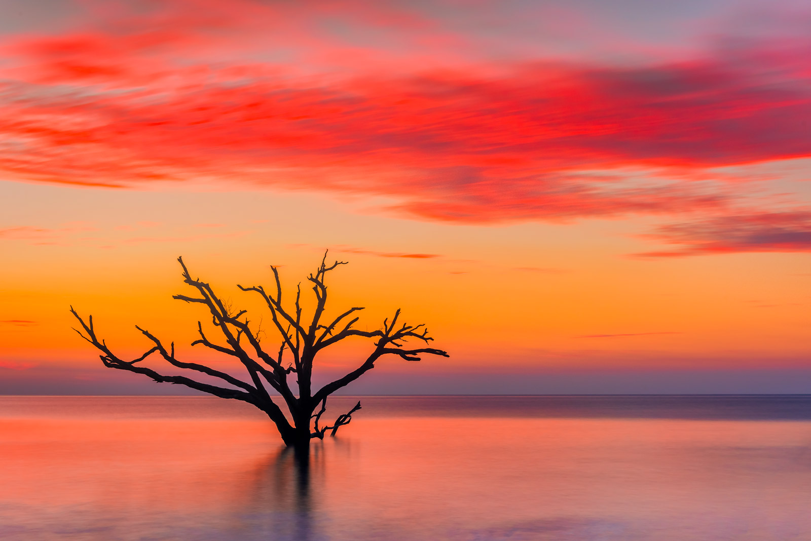 Carolina Coast Fine Art Photography A Limited Edition, Fine Art photograph of a strikingly barren tree in the calm surf during...