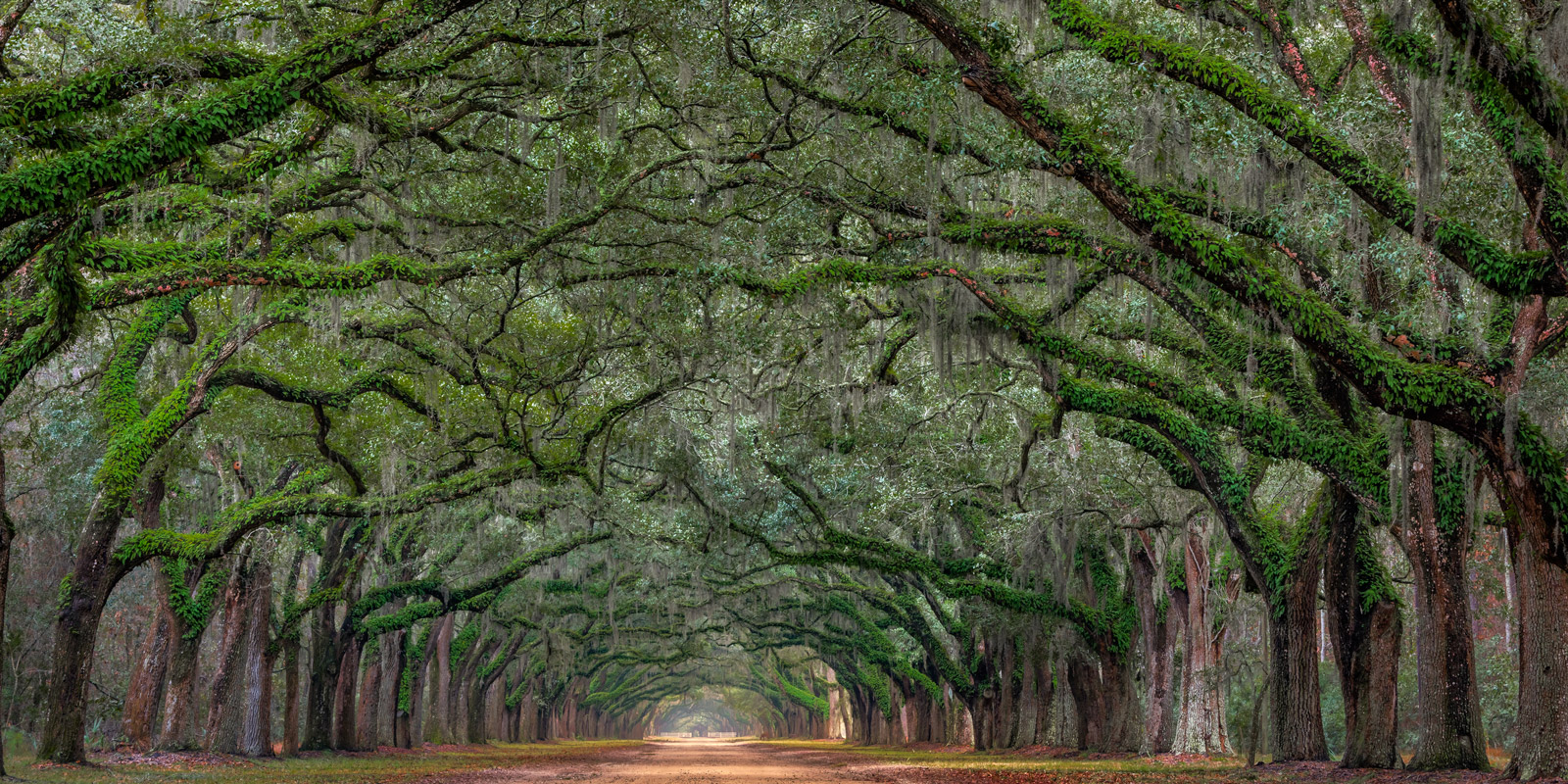 A Limited Edition, Fine Art photograph of an Oak Tree Tunnel over a long driveway at the Wormsloe Plantation in Savannah, Georgia...
