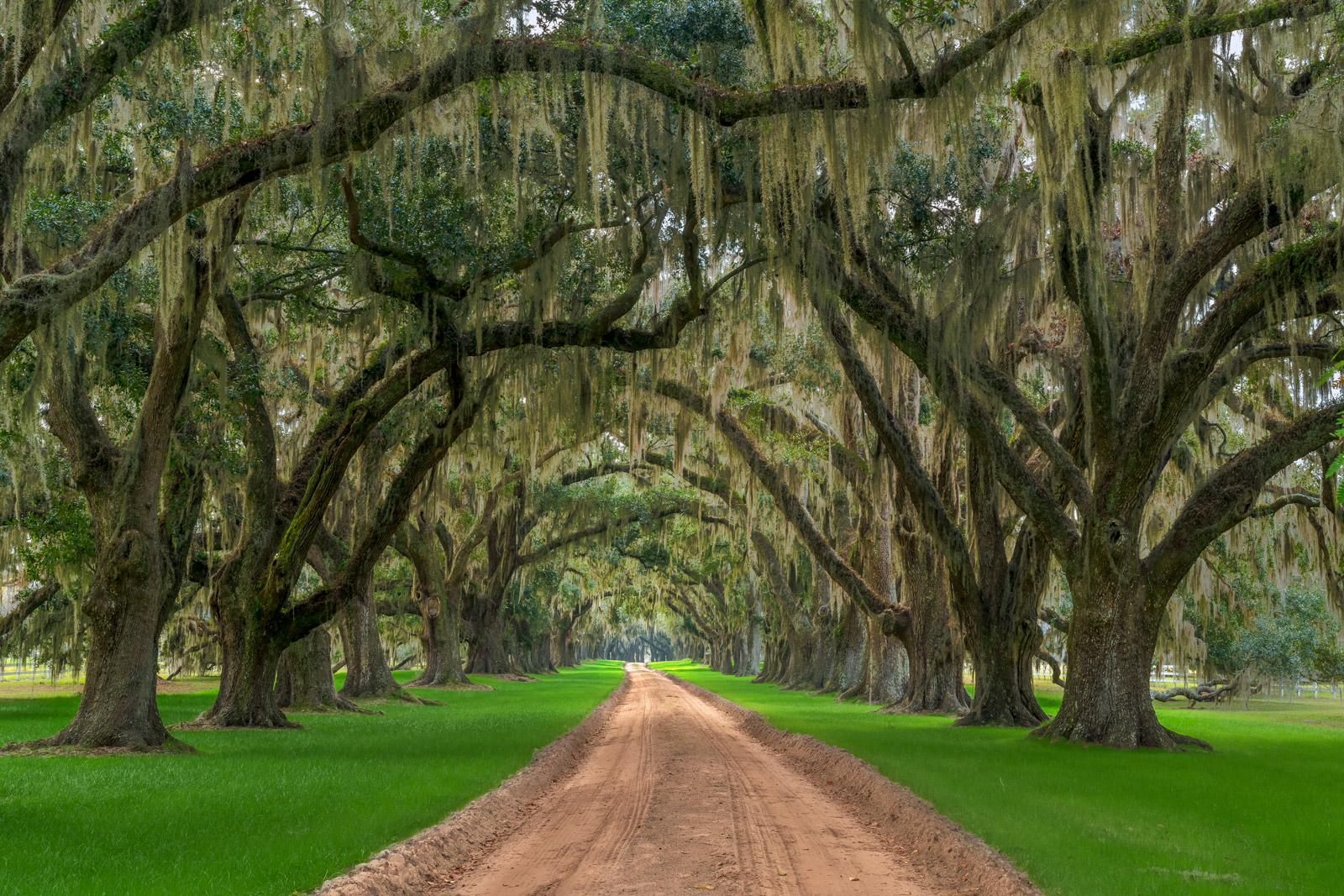 South Carolina, Tomotley, Plantation, Oak, Tree