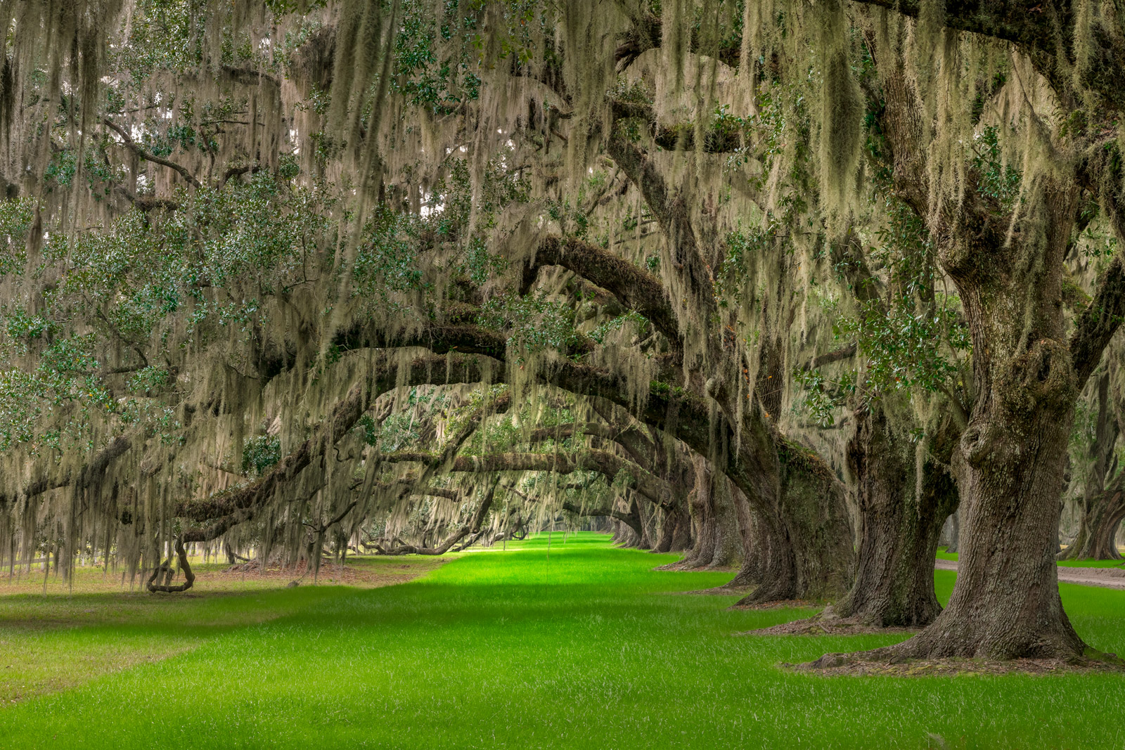 South Carolina, Oak, Trees, Tomotley, Plantation, photo