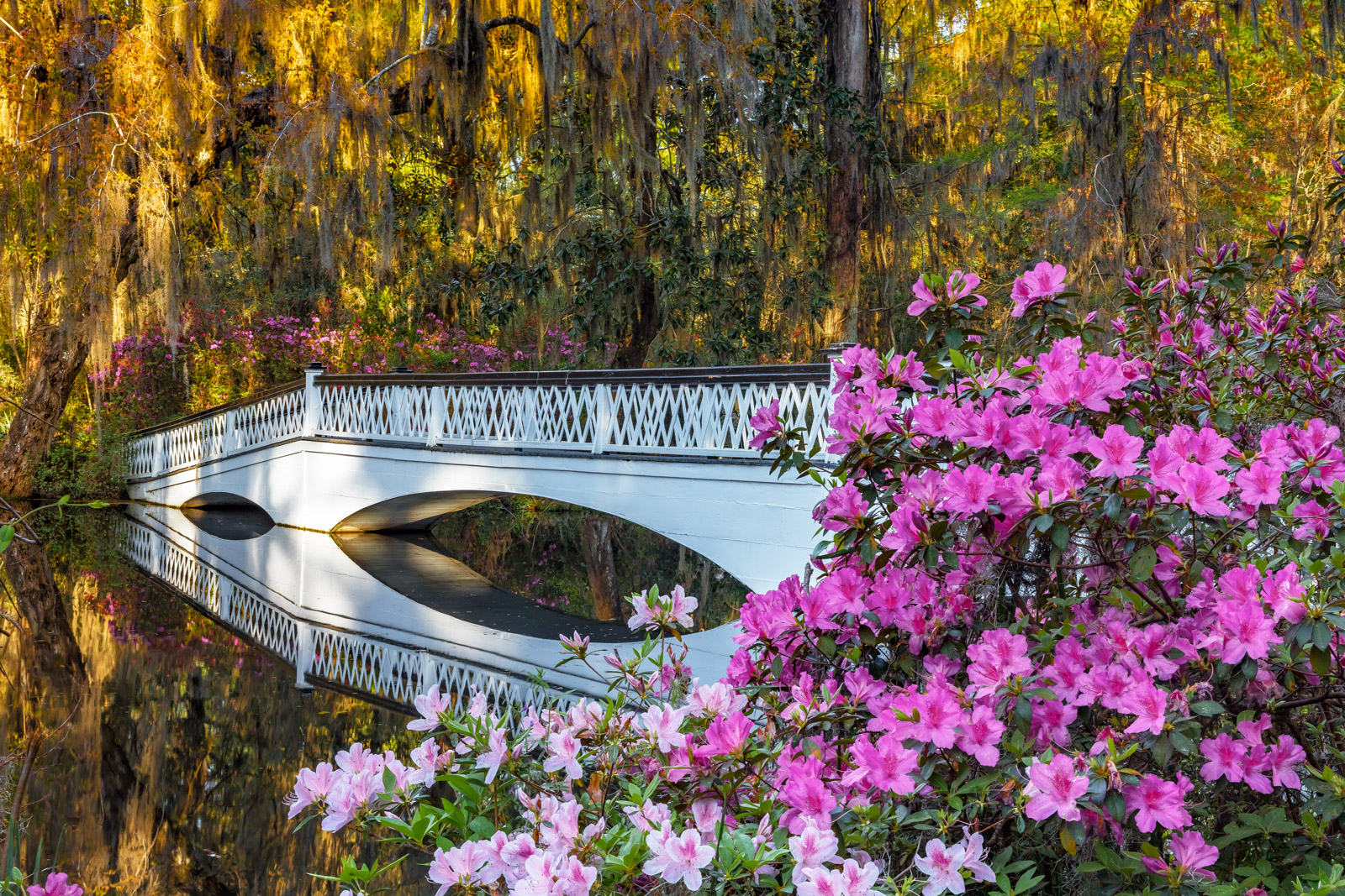 South Carolina, Magnolia Plantation, flowers, spring, reflection
