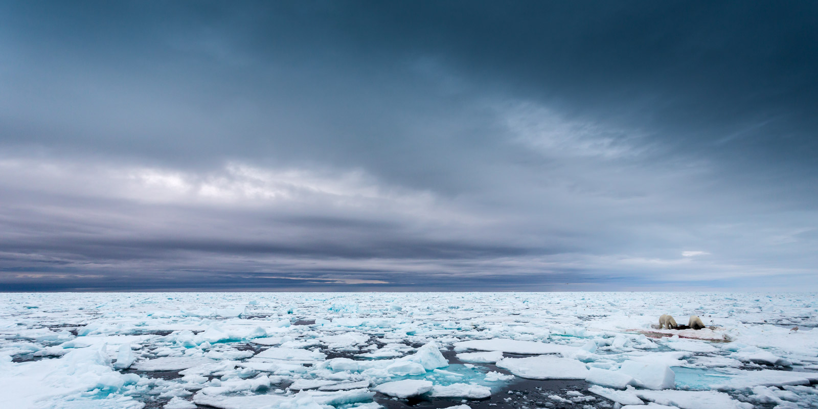 Norway, Spitsbergen, Polar Bear, Ice, limited edition, photograph, fine art, landscape, photo