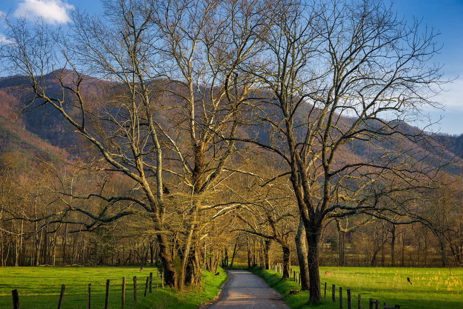 Tennessee, Smoky Mountains, Cades Cove, Sparks Lane, limited edition, photograph, fine art, landscape, photo