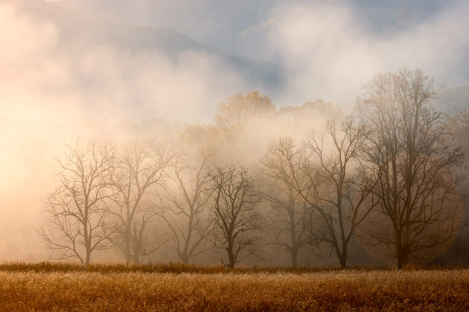 Tennessee, Smoky Mountains, Cades Cove, Fall, Fog, limited edition, photograph, fine art, landscape, photo