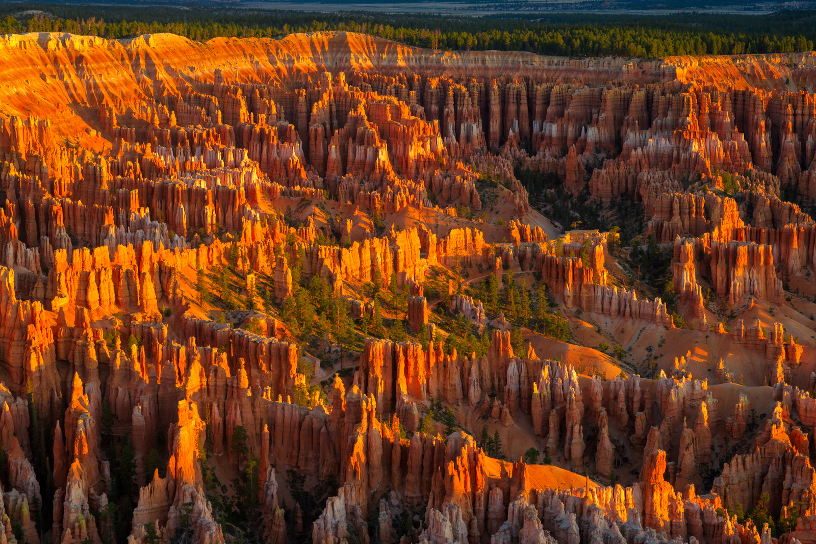 A Limited Edition, Fine Art photograph of Bryce Canyon at Sunrise Point with the soft, warm light of sunrise on the main bowl...