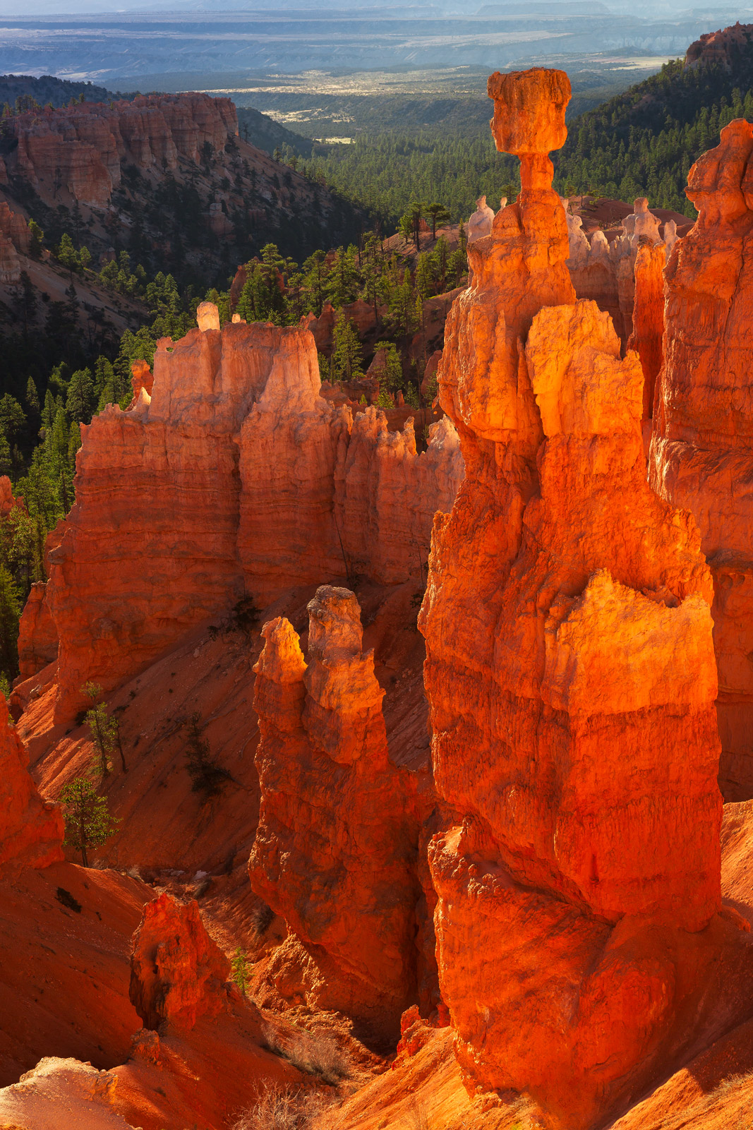 A Limited Edition, Fine Art photograph of Thor's Hammer at sunrise at Bryce Canyon National Park looking like it's almost glowing...
