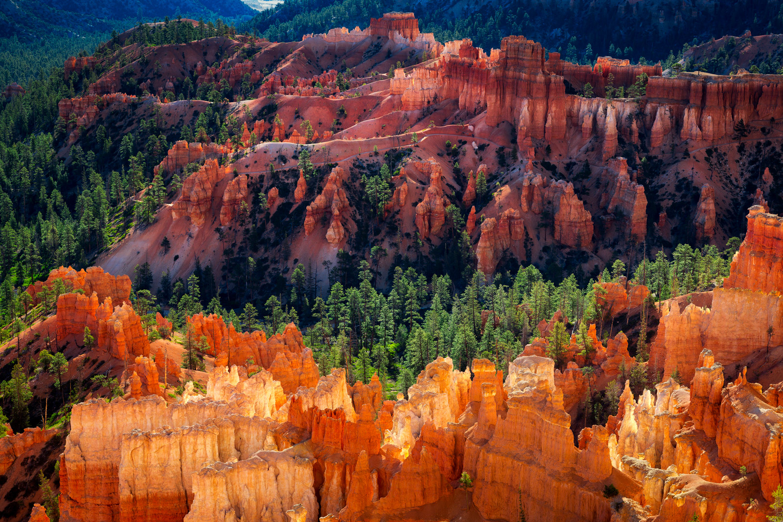 A Limited Edition, Fine Art photograph at Fairyland Point in Bryce Canyon with the the contrast of colors among hoodoos and pine...