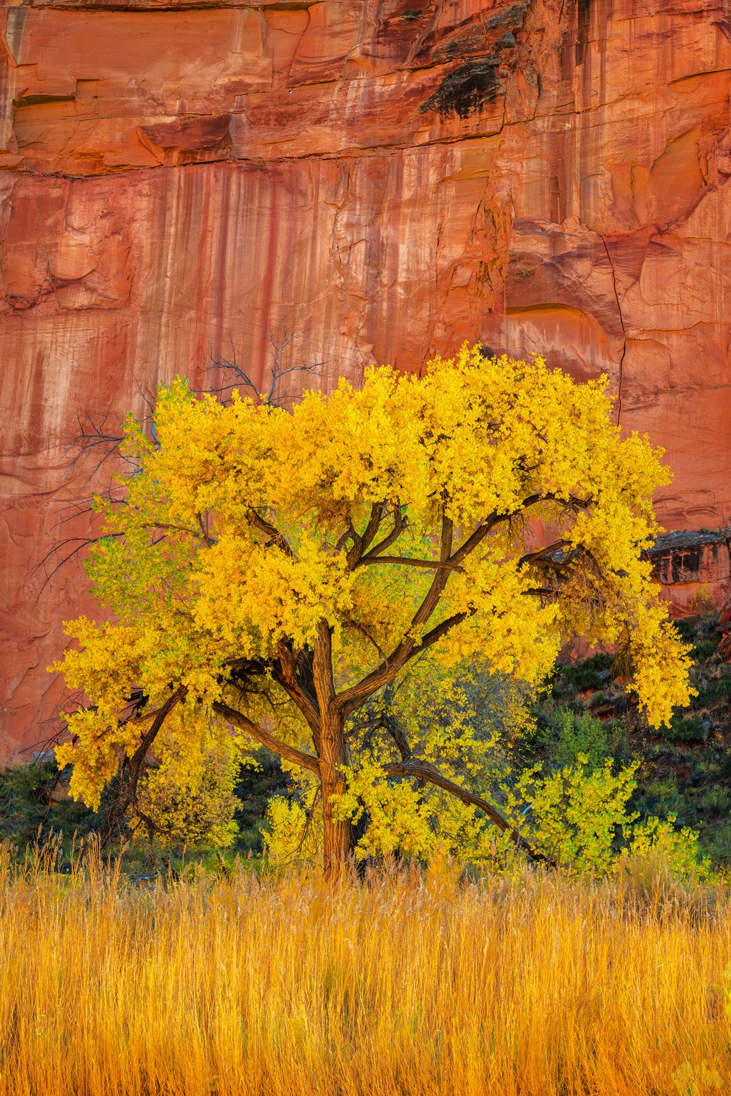 Utah, Capitol Reef, National Park, Fall, Color, Red, Canyon, photo