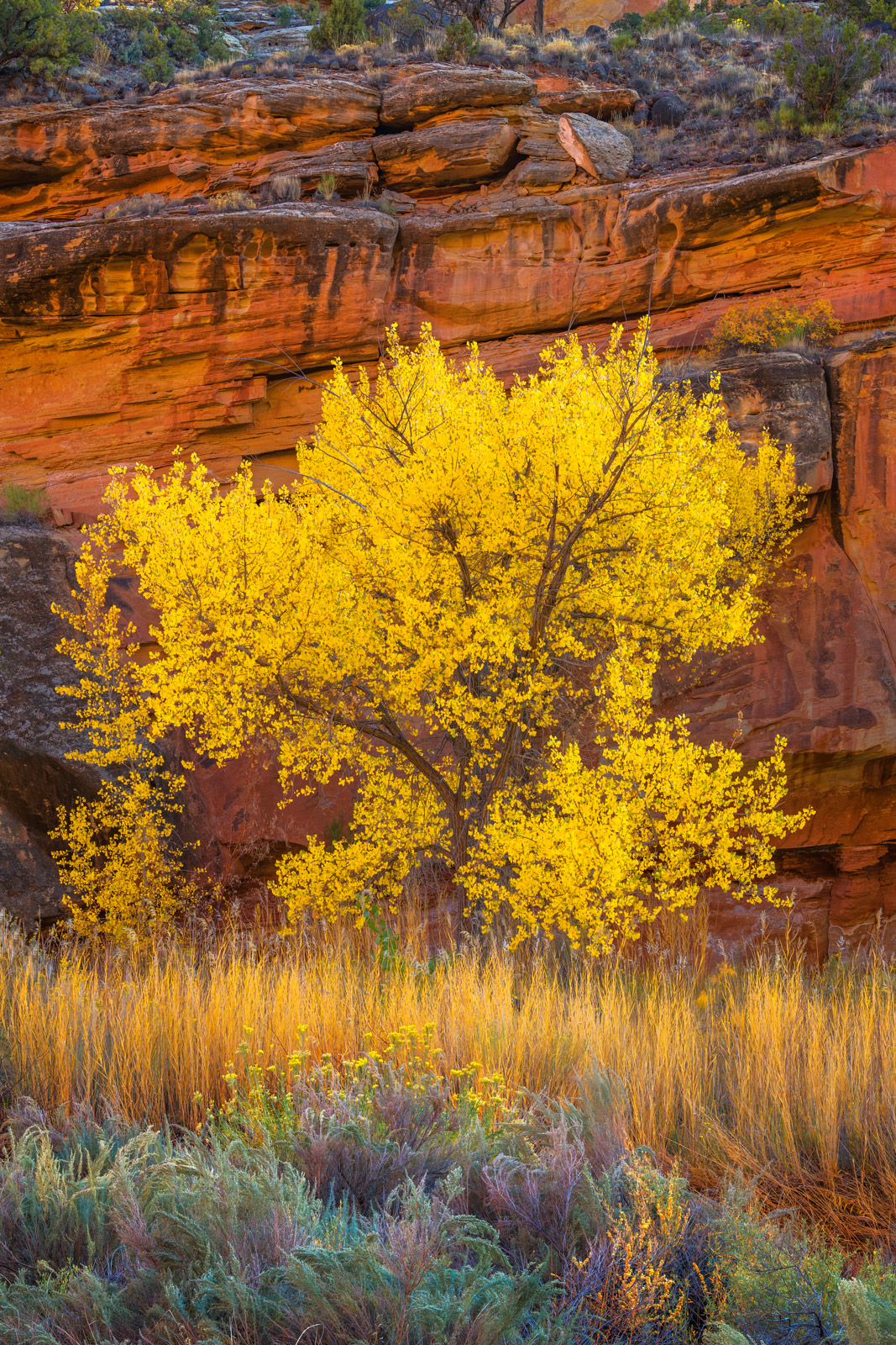 Utah, Capitol Reef, National Park, Canyon, Fall, Colors, red rock, photo