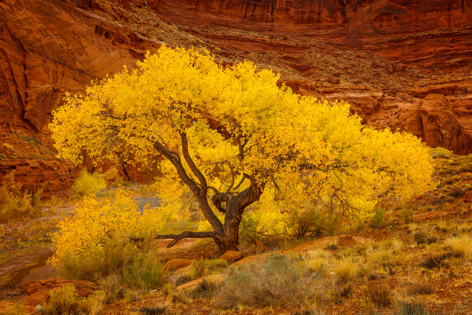 Utah, Hite, Fall, Color, Canyon, Cottonwood, Scene