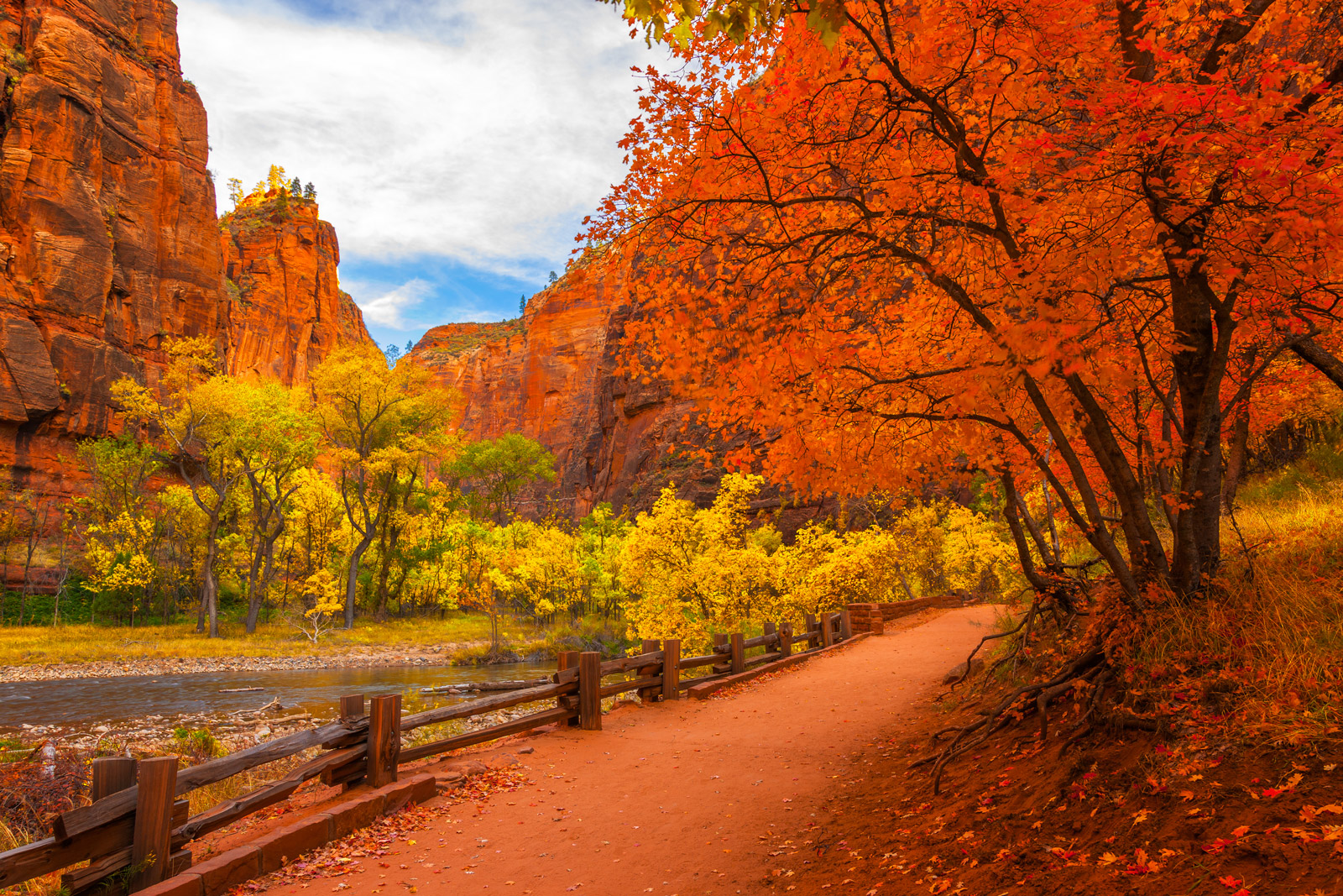 A Limited Edition, Fine Art photograph of brilliant orange and yellow fall colors on a trail by the Virgin River at Zion National...
