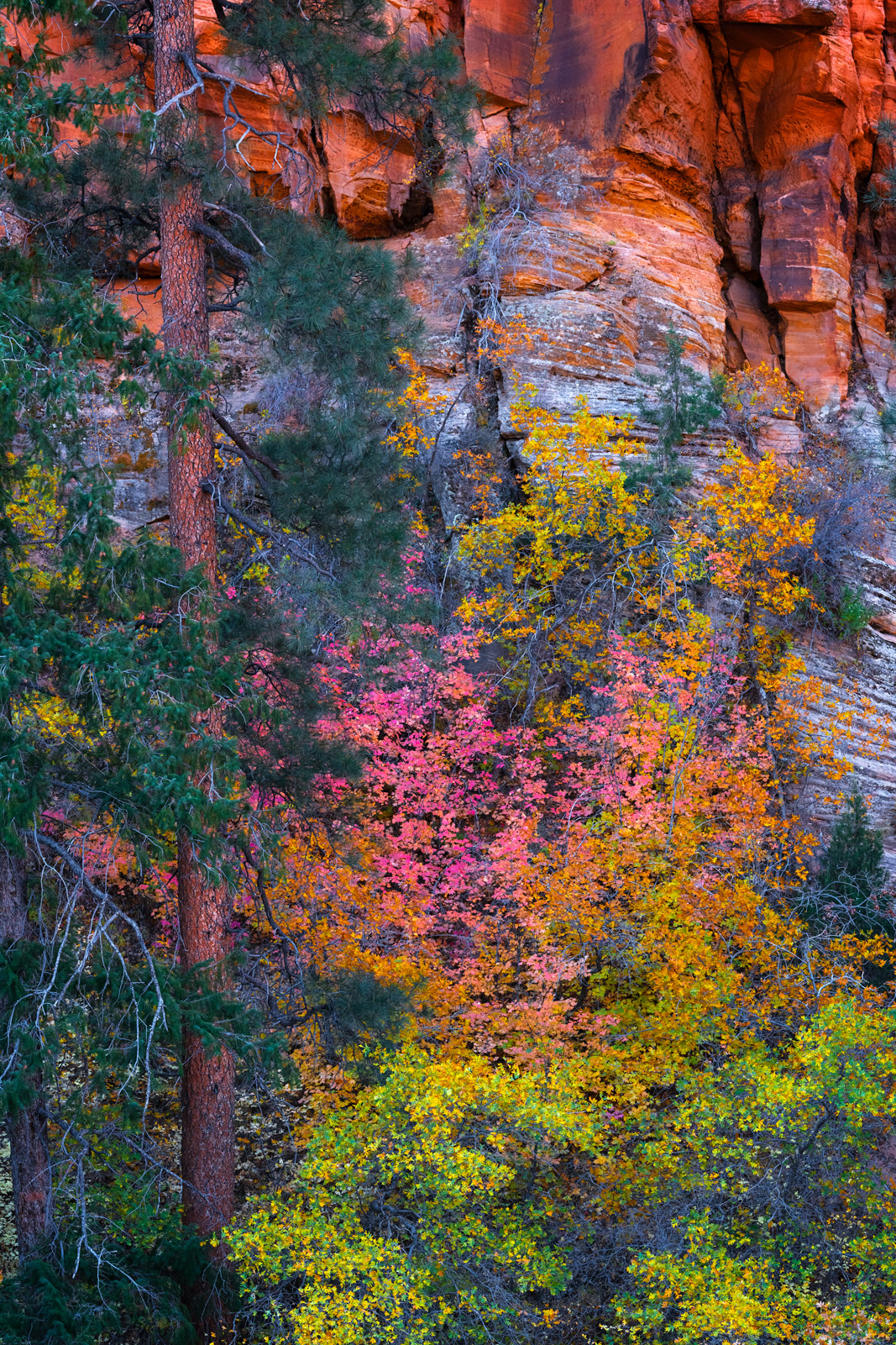 Utah, Zion, National Park, Fall, Color, Canyon, Surprise