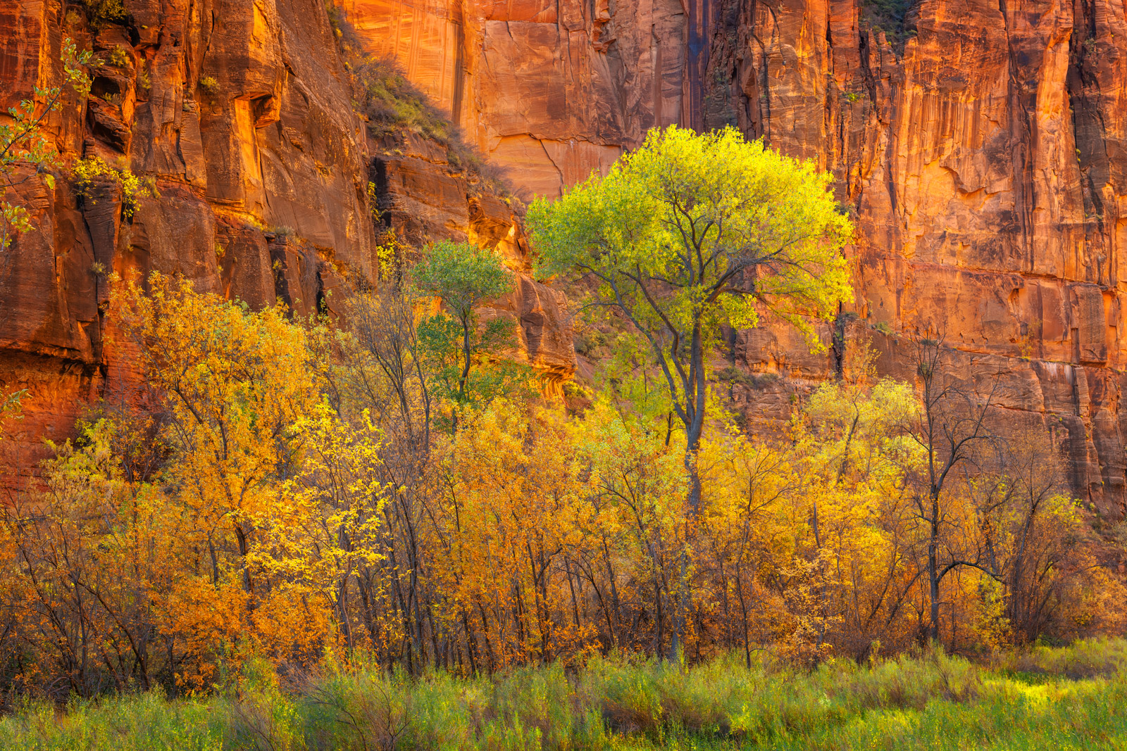 Utah, Zion, National Park, Temple, Sinawava, Red Rock, Canyon, Fall color, limited edition, photograph, photo