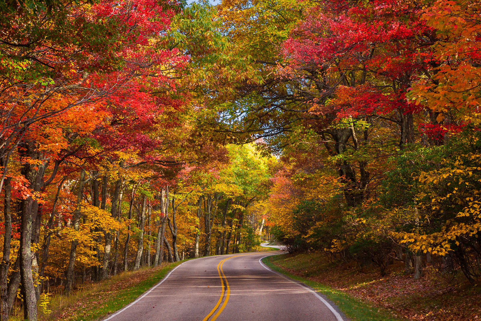 A Limited Edition, Fine Art photograph of a mountain road lined with trees displaying fall colors winding through Shenandoah...