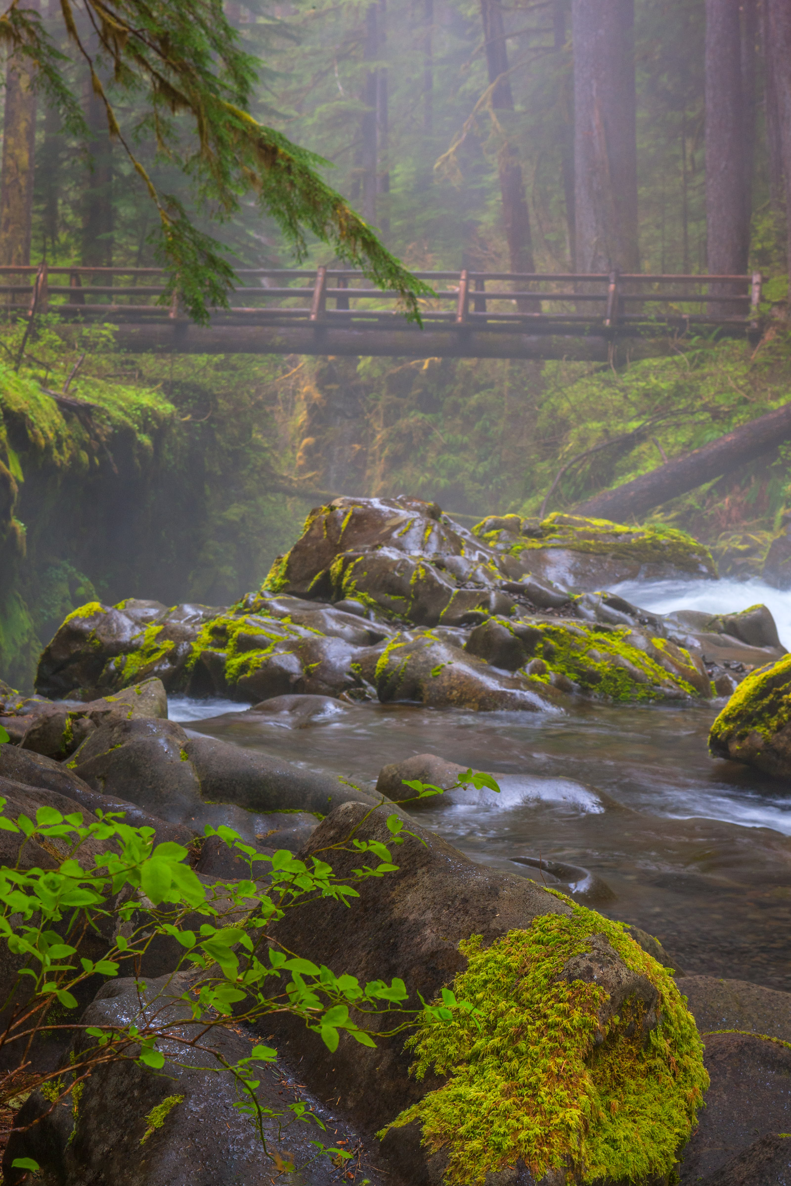 A Limited Edition, Fine Art photograph of a wooden footbridge over a misty river in the Hoh Rain Forest in Olympic National Park...