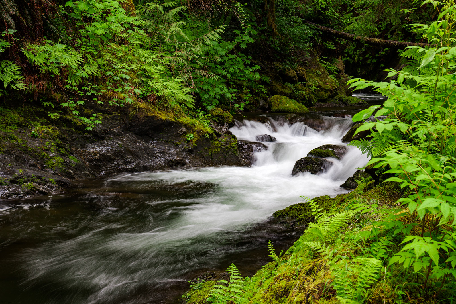 A Limited Edition, Fine Art photograph of a river flowing through the Quinault Rainforest in Olympic National Park, Washington...