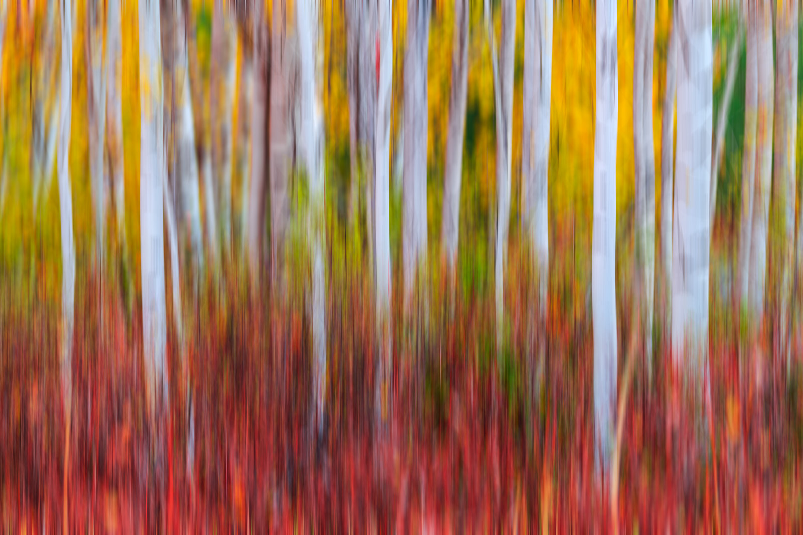 abstract, abstract photo, Fall Color, Birch, Tree, photo