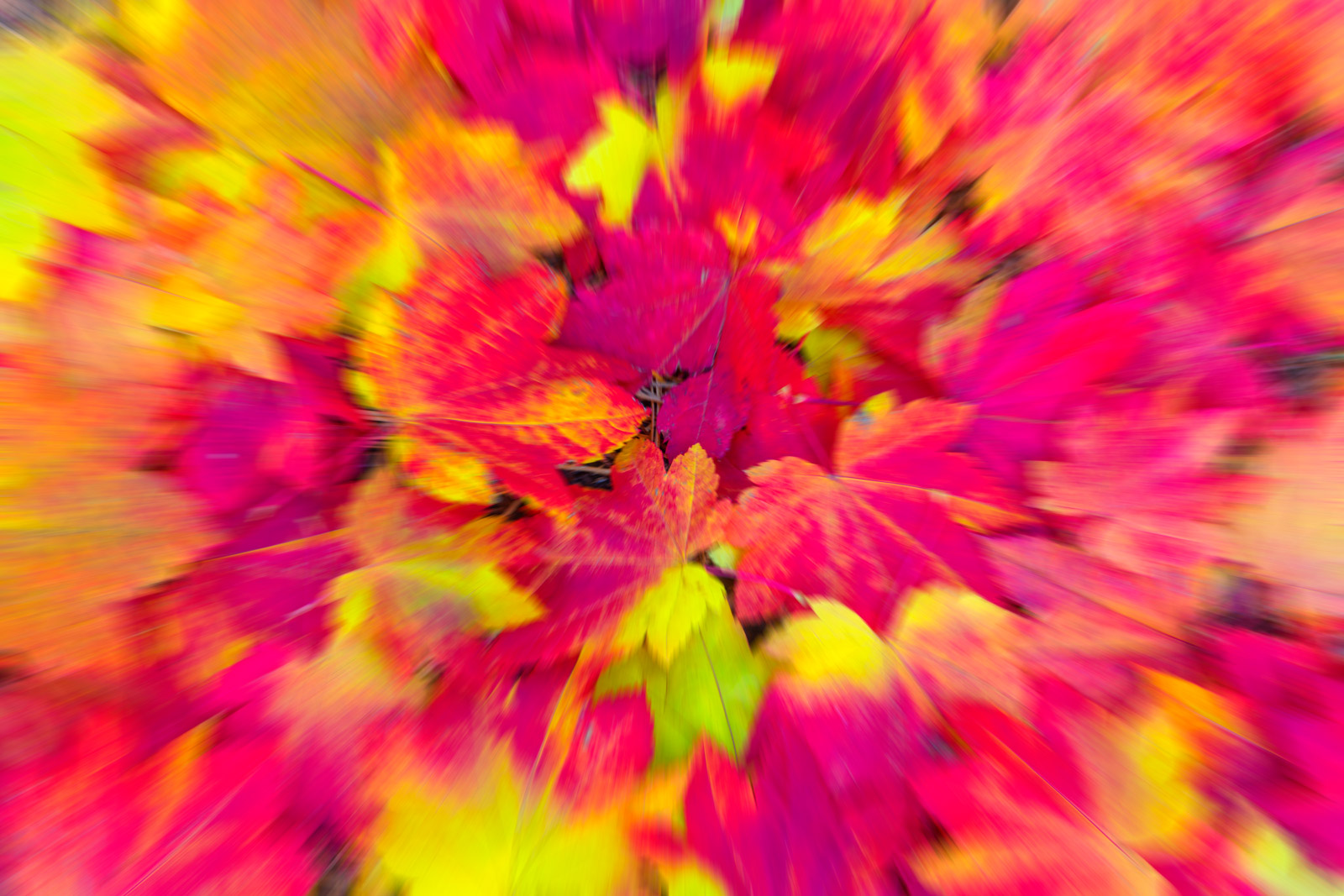 A Limited Edition, Fine Art abstract photograph of fall leaves appearing to explode out in all directions. Available as a Fine...